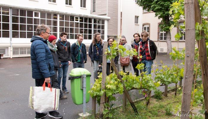 Participer à la végétalisation des villes